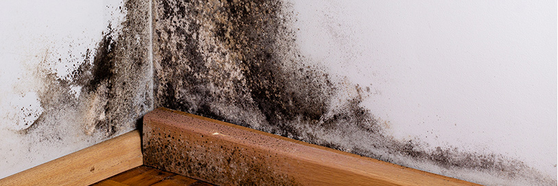 Mold Remediation Company Toronto